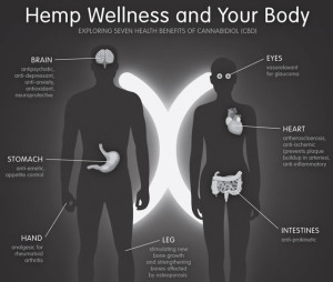 The above diagram is a summary of the health benefits of hemp and CBD.